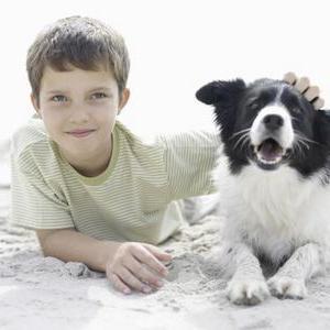 Как лечить лишай у собаки