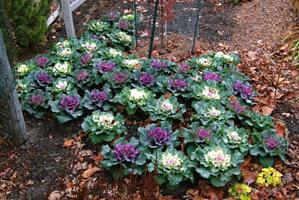 Как сделать красивую грядку в огороде