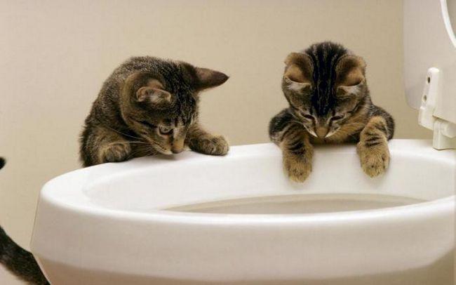 Как узнать, когда котенок хочет в туалет