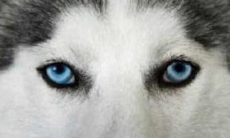 Как видят собаки: особенности их зрения