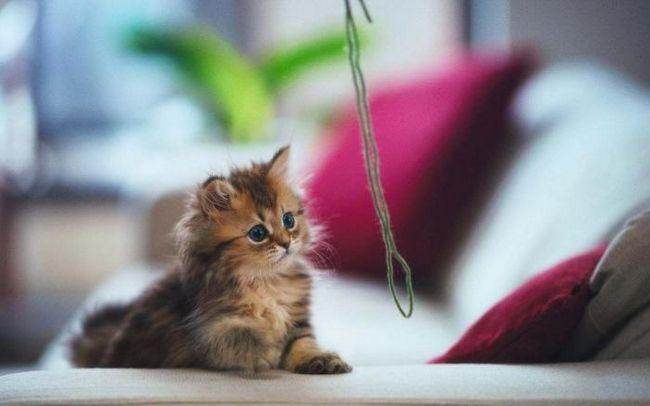 Как воспитать котенка: важные рекомендации