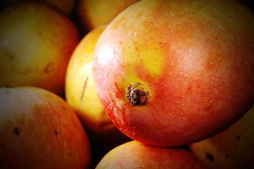 Как выбрать манго, чтобы извлечь максимум пользы и вкуса?