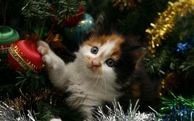 Как защитить новоголнюю елку от вашей кошки
