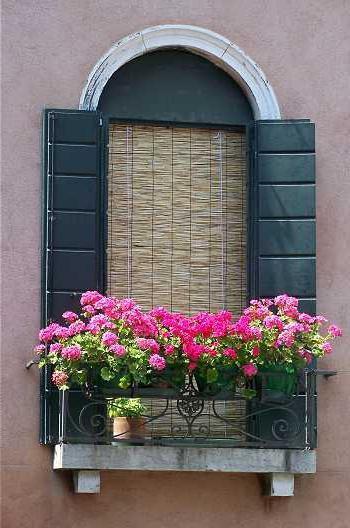 Какие цветы посадить на балконе?