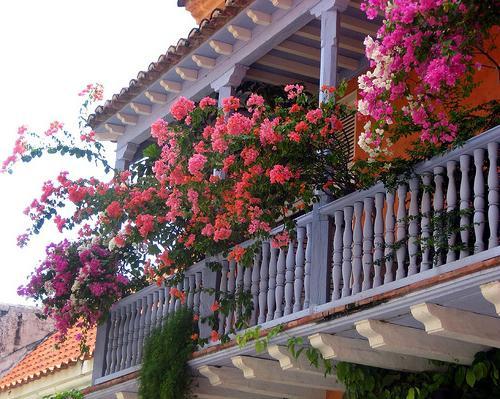 какие цветы можно посадить дома