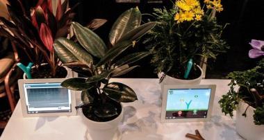 Какие комнатные растения, не требующие света, выбрать?