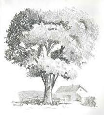 Нарисованное дерево