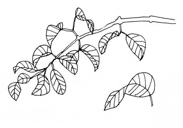 Дерево нарисованное