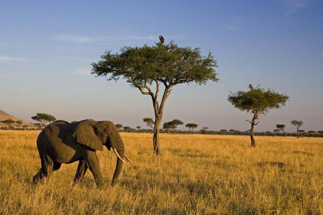 второй по величине материк африки