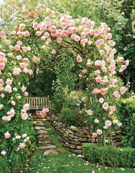 в какое время лучше сажать розы
