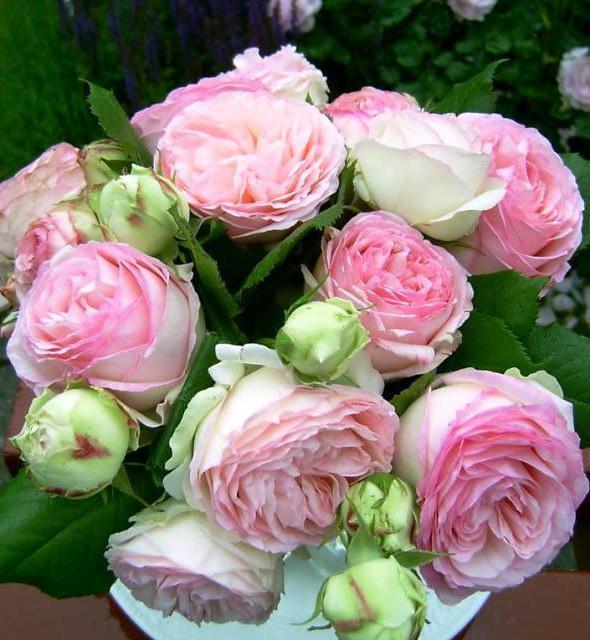 в какое время года лучше сажать розы