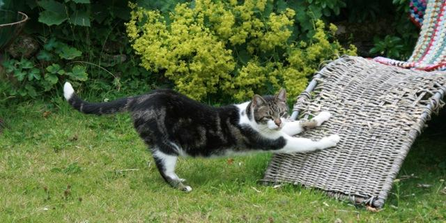Для кошки своими руками