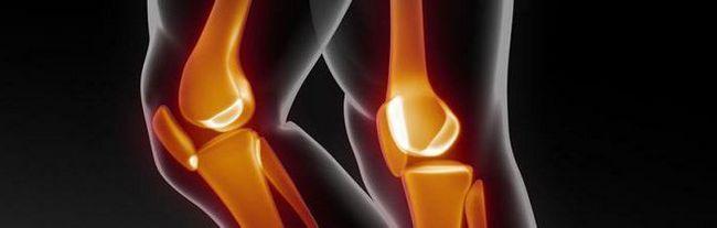 анатомия коленного сустава человека