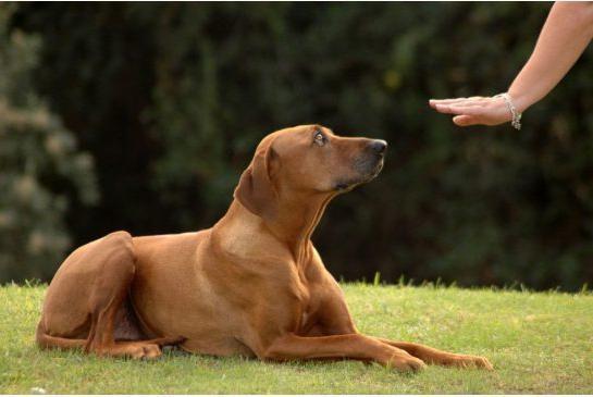 Команда собаке. Как научить выполнять?