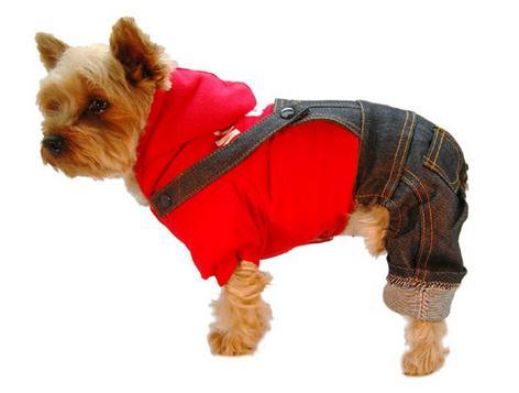 Комбинезон для собаки – необходимость или прихоть хозяев?