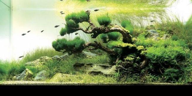 Коряга для аквариума. Дизайн аквариума
