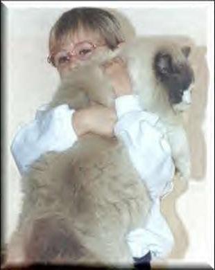 Кошки крупной породы: гигантские очарования