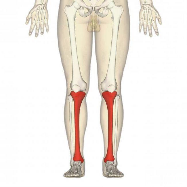кости нижних конечностей человека анатомия