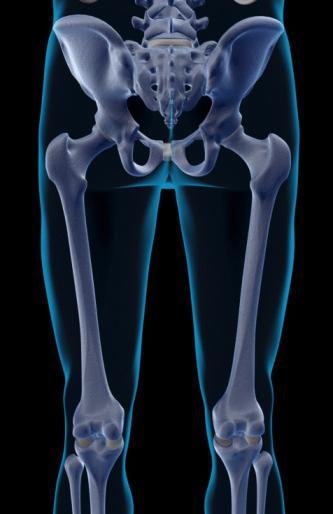 скелет человека скелет нижней конечности