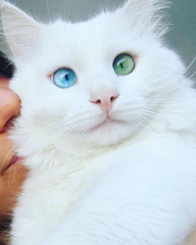 Кот, который буквально гипнотизирует своим взглядом