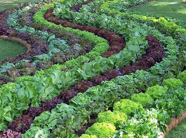 оформление грядок огорода своими руками фото