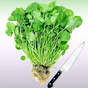 Кресс-салат: полезные свойства и простой способ выращивания дома