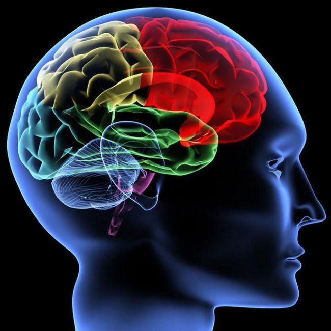 боковой желудочек головного мозга