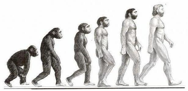 предки людей