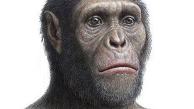 предки современного человека