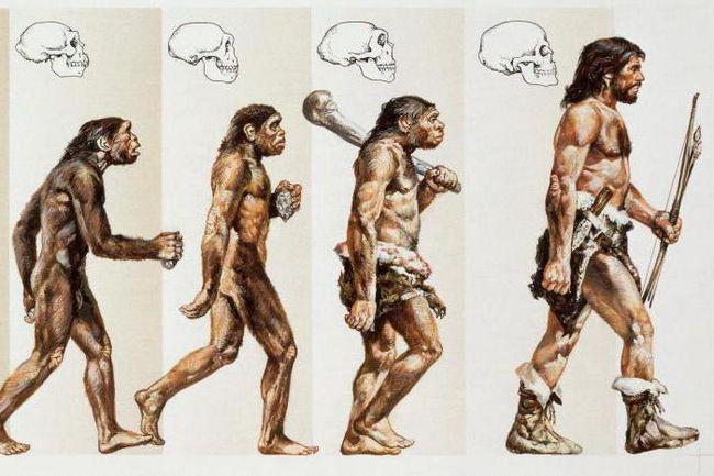 предшественники человека