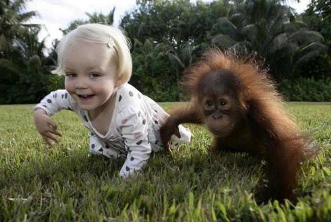 обезьяноподобный предок человека