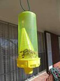Ловушка для пчел. Информация для начинающих пчеловодов