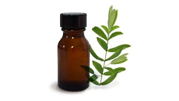 Сколько стоит масло чайного дерева