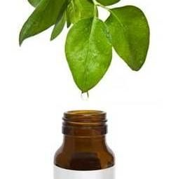 чайное дерево эфирное масло применение