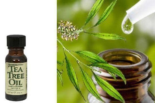 удаление папилломы маслом чайного дерева