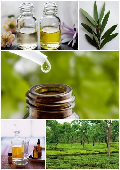 лечение папиллом маслом чайного дерева