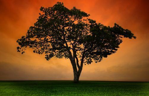 медитация на прощение обид