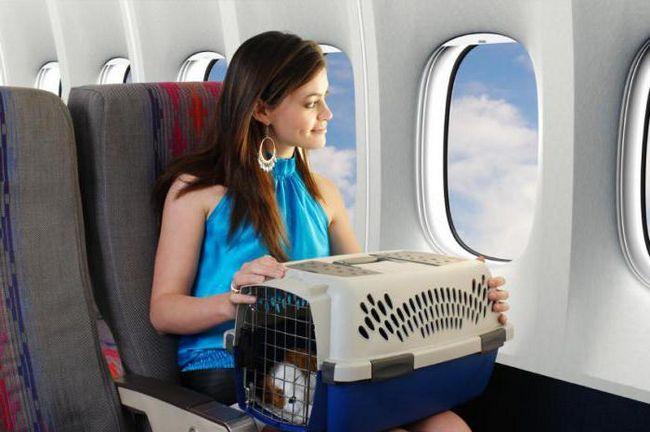 международный ветеринарный паспорт для собак