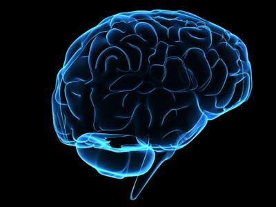 мозг человека отделы