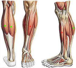мышцы задней поверхности голени