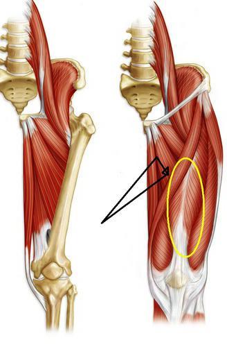 мышцы нижних конечностей таблица