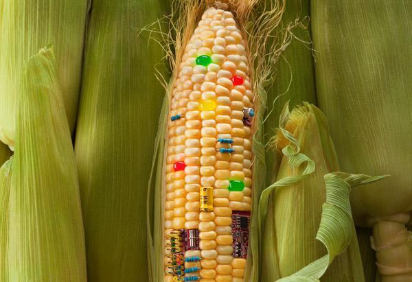 Наше здоровье: список продуктов, содержащих гмо