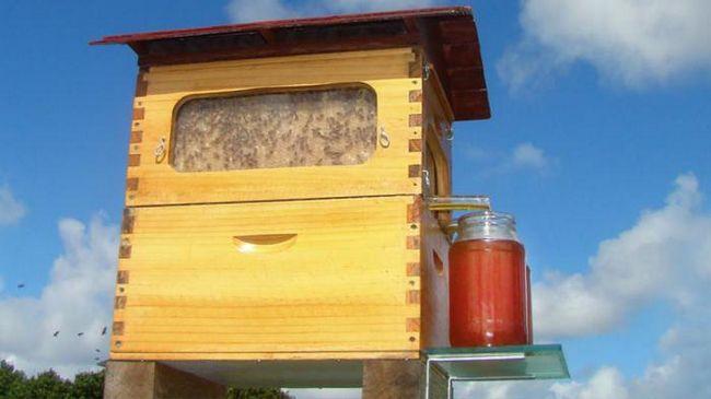 Новый улей позволяет легко собирать мед и не беспокоить пчел