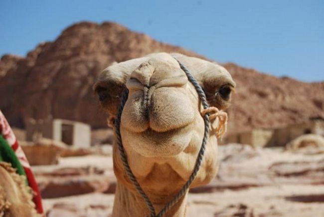 нужна ли виза в египет