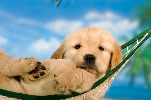 Определяем возраст собак по человеческим меркам