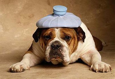 отравление у собак симптомы