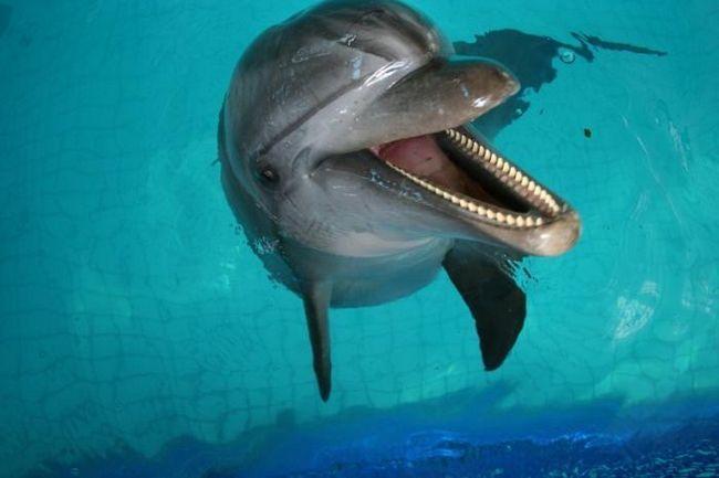 дельфинарий в казани