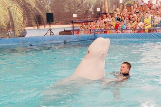 дельфинарий в казани цены