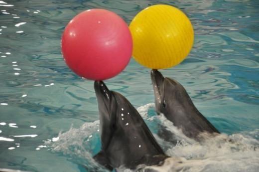 дельфинарий в казани адрес