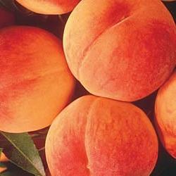 Персиковый цвет особенно актуален весной